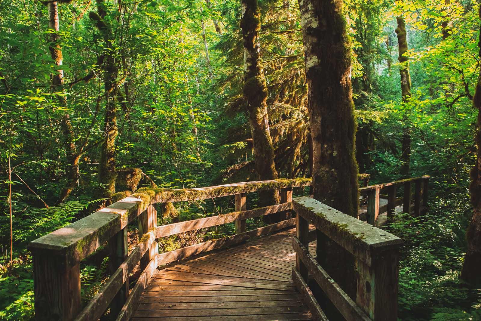 Walk theough Forest Park in Portland Oregon